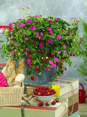 Gartentipp Juli